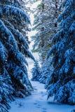Spårar i snowen Royaltyfria Bilder