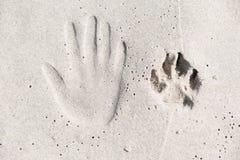 Spåret av den mänskliga handen och hunden tafsar på sanden royaltyfria foton