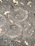 Spåret av klöven av en häst, slut upp som specificeras, på smutshästryggslingorna till och med träd på den gula gaffeln och Rose  Royaltyfria Bilder