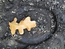 Spåret av klöven av en häst, slut upp som specificeras, på smutshästryggslingorna till och med träd på den gula gaffeln och Rose  Royaltyfri Fotografi