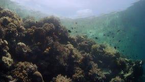 Spåring av skottet över en intakt korallrev stock video