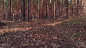 Spåring av skottet av skogen i höst arkivfilmer