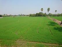Spårplog i risfält som gångbanan som jämnt tar fram skörden royaltyfri fotografi