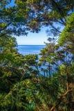 Spårsikt i Abel Tasman National Park, Nya Zeeland Royaltyfria Bilder