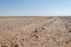 Spårspring till och med plant stenigt och ointressant ökenlandskap i den forntida Namib öknen av Angola royaltyfria bilder