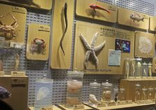 Spécimen biologique marin images stock