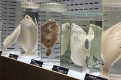 Spécimen biologique marin image stock