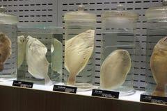 Spécimen biologique marin image libre de droits