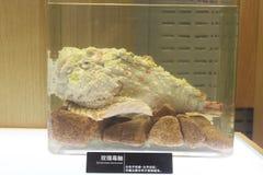 Spécimen biologique marin photos stock
