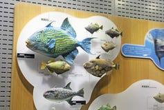 Spécimen biologique marin photo libre de droits