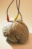 Spécimen de cerveau avec des câbles de poids du commerce Image stock
