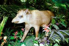 Spécimen de fourmilier du musée de Changhaï de la nature Images stock