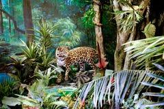Spécimen de léopard du musée de Changhaï de la nature Photographie stock