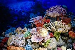 Spécimens des coraux marins et poissons Photos libres de droits