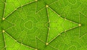 Spód Zielonego liścia Bezszwowy Dachówkowy tło obraz royalty free