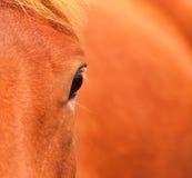 spójrz końskiego Fotografia Royalty Free