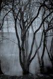 Spöka skogen Arkivbilder