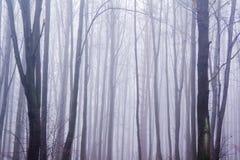 spökad dimmig skog Arkivfoto