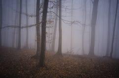 Spökad skog med dimma på allhelgonaafton Royaltyfria Bilder