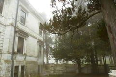 Spökad trädgård i dimma Arkivbild