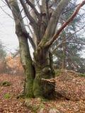 spökad tree Arkivbilder