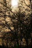 spökade trän Arkivfoto