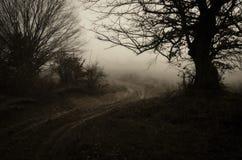 Spökat land med vägen nära gammalt träd Arkivfoton