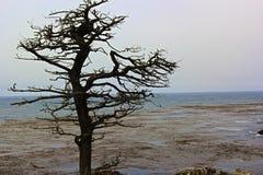 Spöketräd royaltyfri fotografi