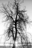 Treesilhouette Royaltyfri Foto