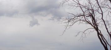 Spöklik allhelgonaaftonek mot illavarslande himmelQuercus royaltyfri fotografi