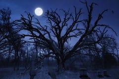 Spöklik allhelgonaaftonkyrkogård med ugglan och fullmånen Arkivfoton