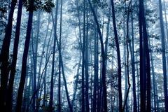 Spöklik dimmig mystikermörkerskog Fotografering för Bildbyråer