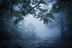 Spöklik dimmig regnig skog royaltyfria bilder