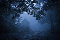 Spöklik dimmig regnig skog arkivfoto