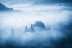 Spöklik dimmig regnig skog Arkivbilder