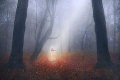 Spöklik flicka som spelar fiolen i en dimmig skog arkivbild