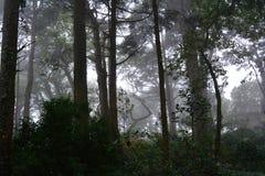 Spöklik halloween skog i morgonljuset Fotografering för Bildbyråer