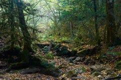 Spöklik halloween skog med ett stupat träd arkivfoto
