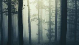 Spöklik läskig skog med dimma till och med träd arkivfoto