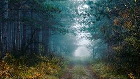 Spöklik skog 02 Royaltyfri Foto