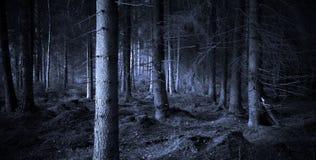 spöklik skog Royaltyfria Bilder
