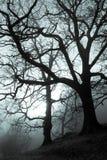spöklik skog Arkivfoto