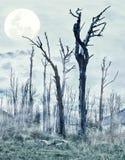 spöklik skog Arkivfoton