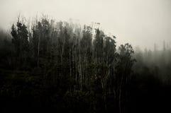 spöklik skog Royaltyfri Foto