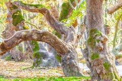 spöklik skog Royaltyfria Foton