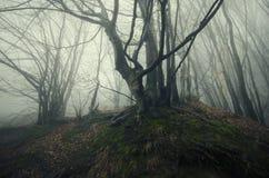 Spöklik skog med dimma Royaltyfria Foton