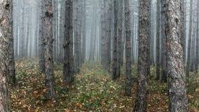 Spöklik skog nära Montana, Bulgarien Royaltyfri Fotografi