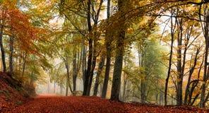 Spöklik skogbana arkivfoto