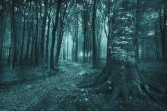 Spöklik slinga in i den dimmiga skogen Royaltyfri Fotografi