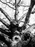 spöklik tree Royaltyfri Bild